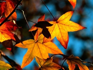 Colors-Of-Fall-