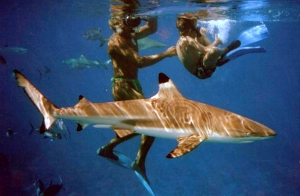 Shark Fun-2