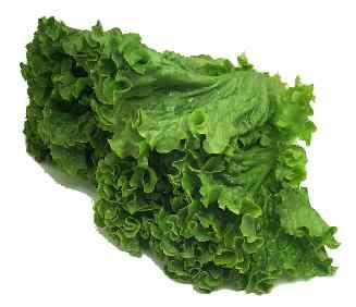 greenleaflettuce
