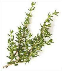 Herb - Thyme