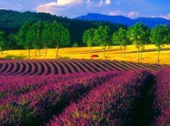 Provence France (1)
