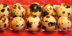 Quail Eggs (1)